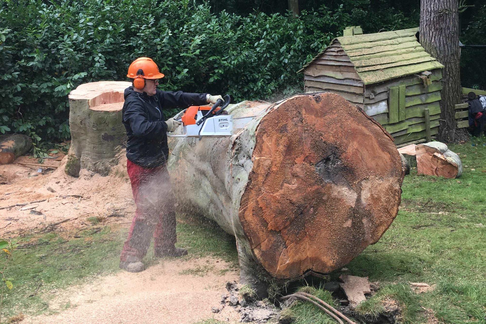 Gefällter Baumstamm wird zersägt